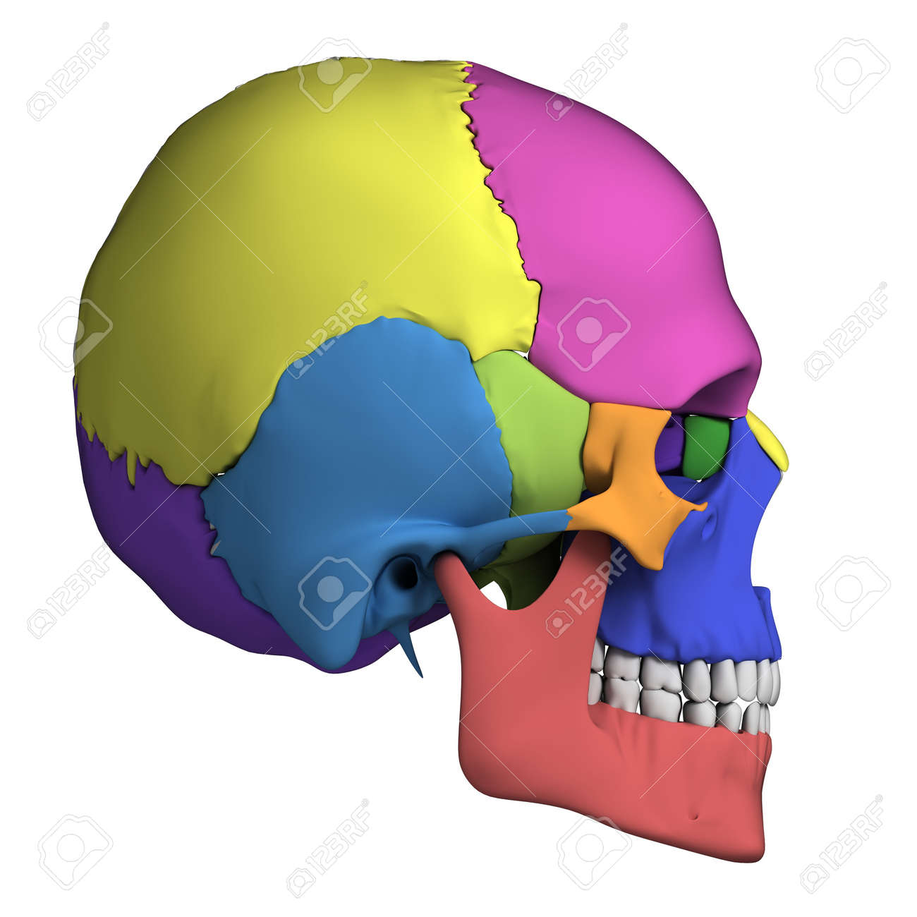 3d Rendered Illustration - Human Skull Anatomy Stock Photo, Picture ...