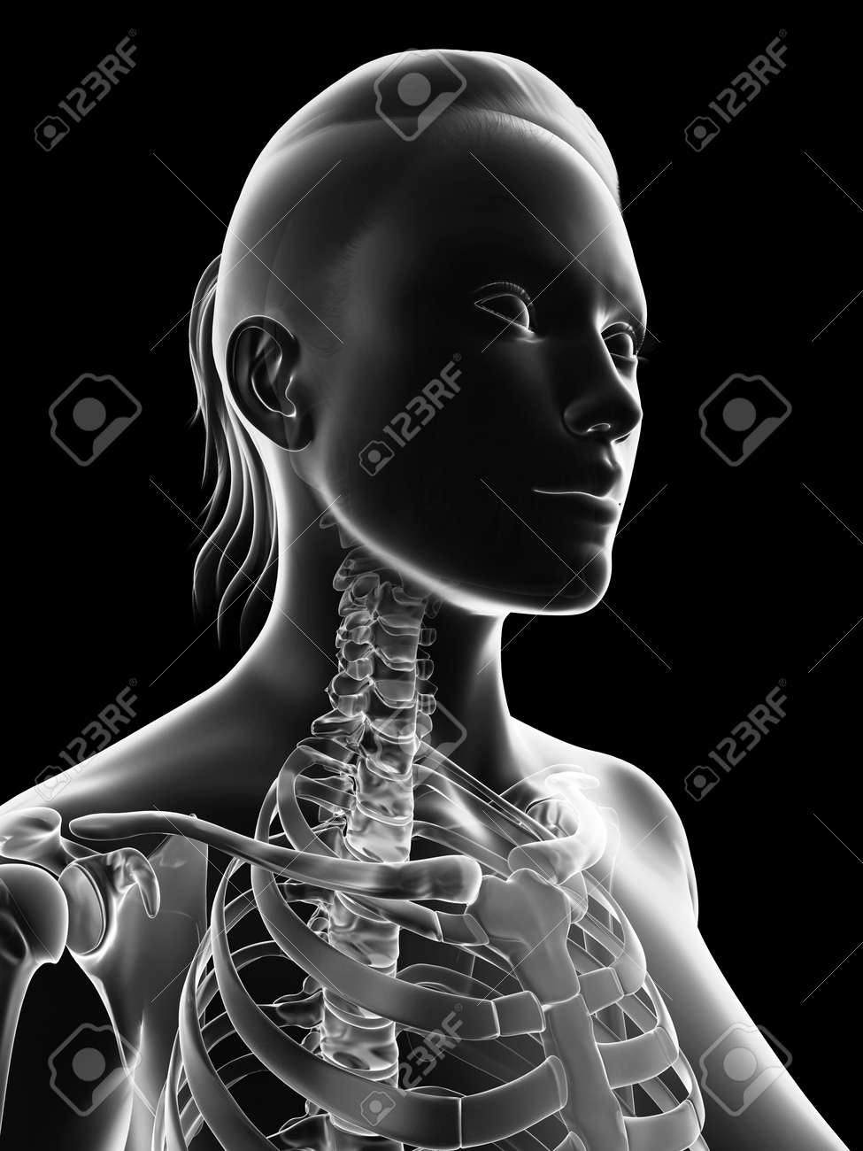 Transparent Female Skeleton Neck Stock Photo Picture And Royalty