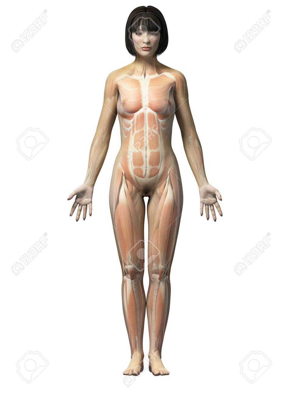 Contemporáneo Anatomía De Una Mujer Friso - Anatomía de Las ...