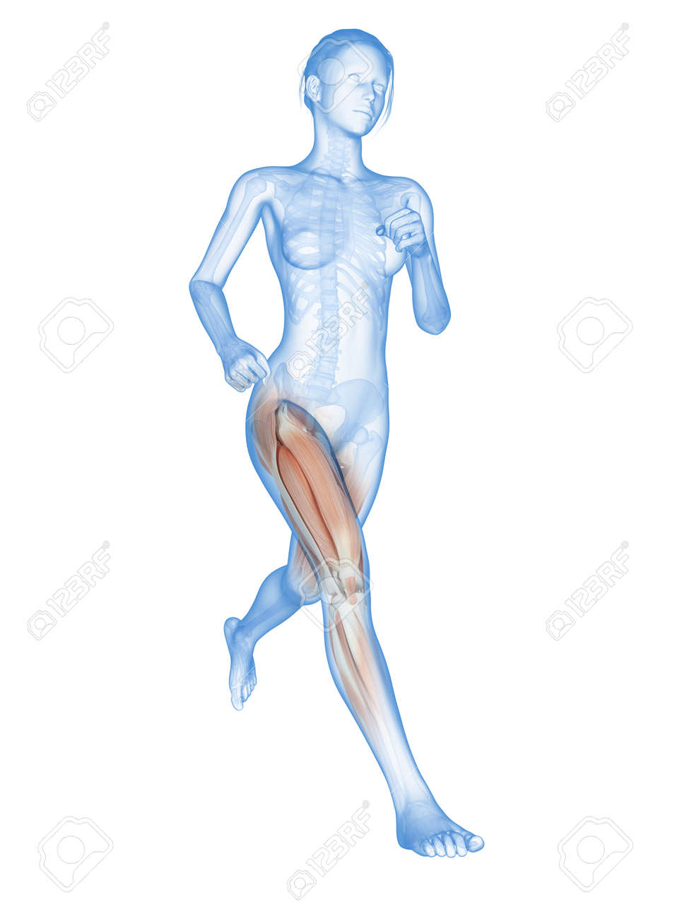 Woman Running - Visible Anatomy Of The Leg Muscles Stock Photo ...