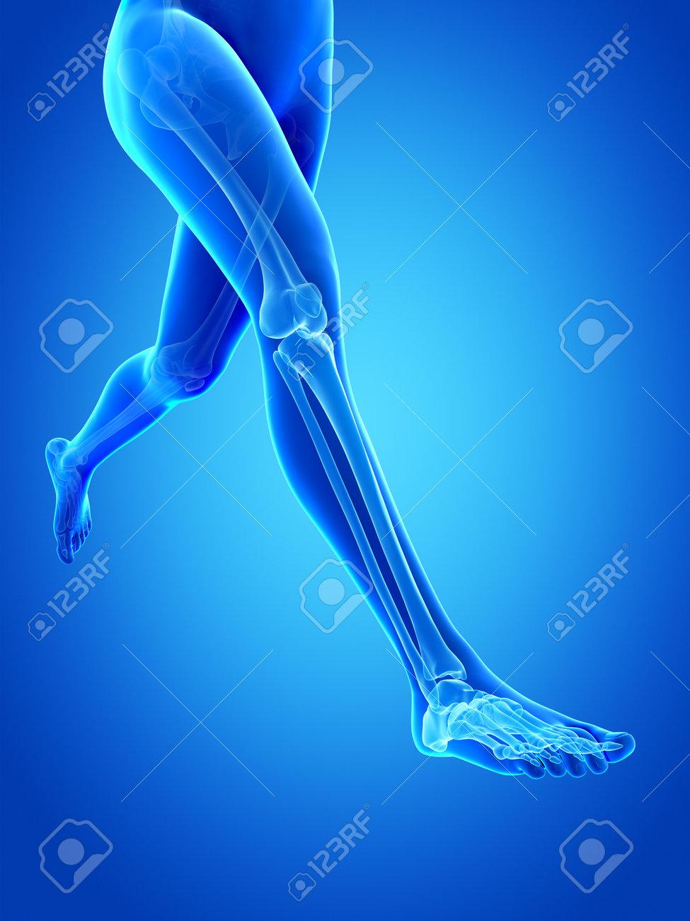 Woman Running Visible Anatomy Of The Leg Bones Stock Photo