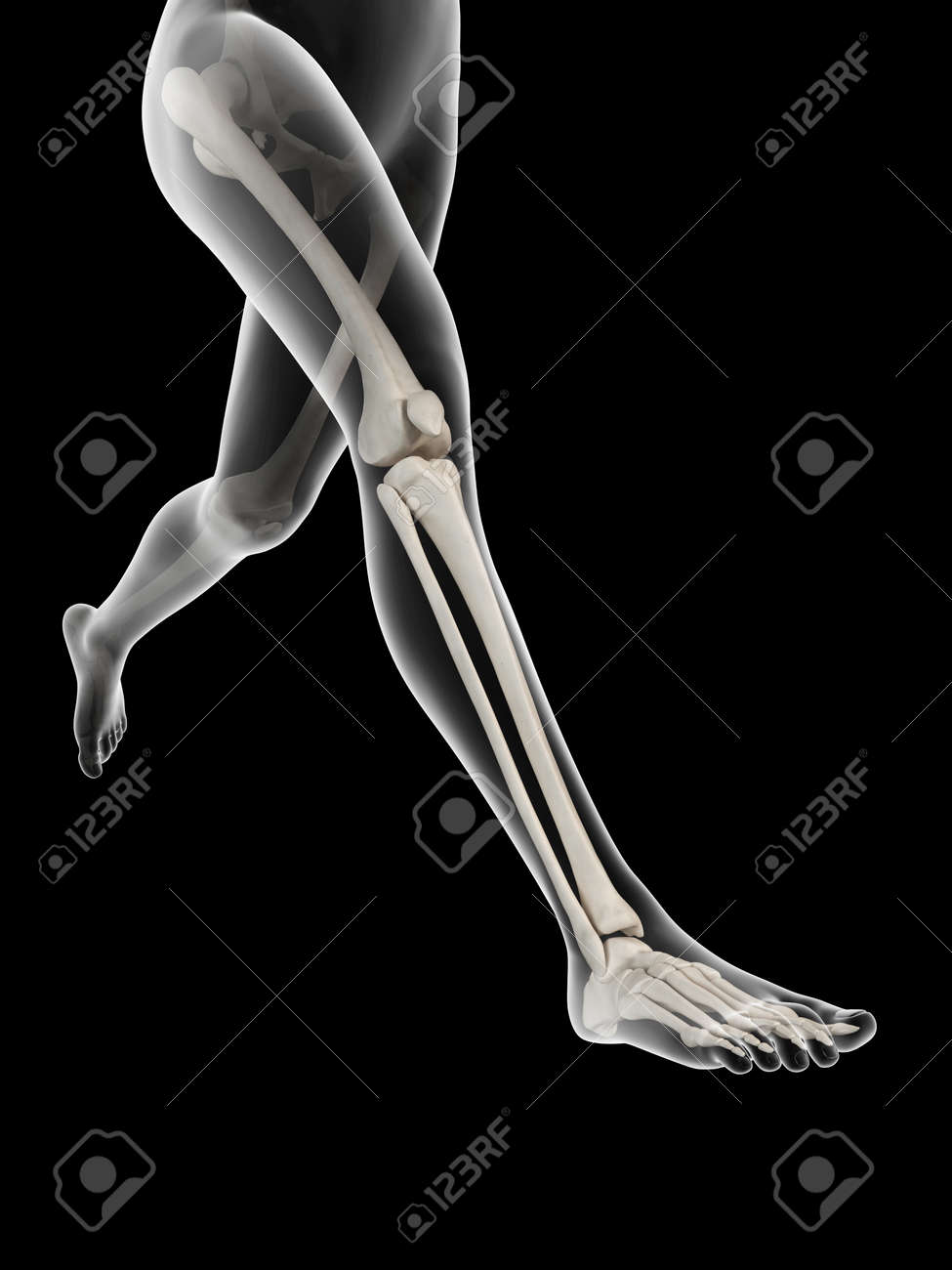 Woman Running Visible Anatomy Of The Leg Bones Stock Photo