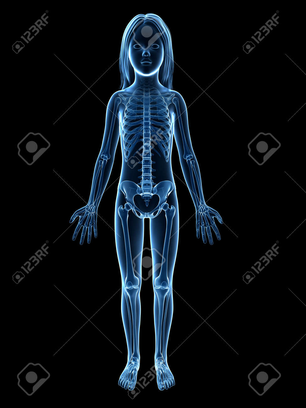 Anatomy Of A Young Girl Skeleton Stock Photo Picture And Royalty