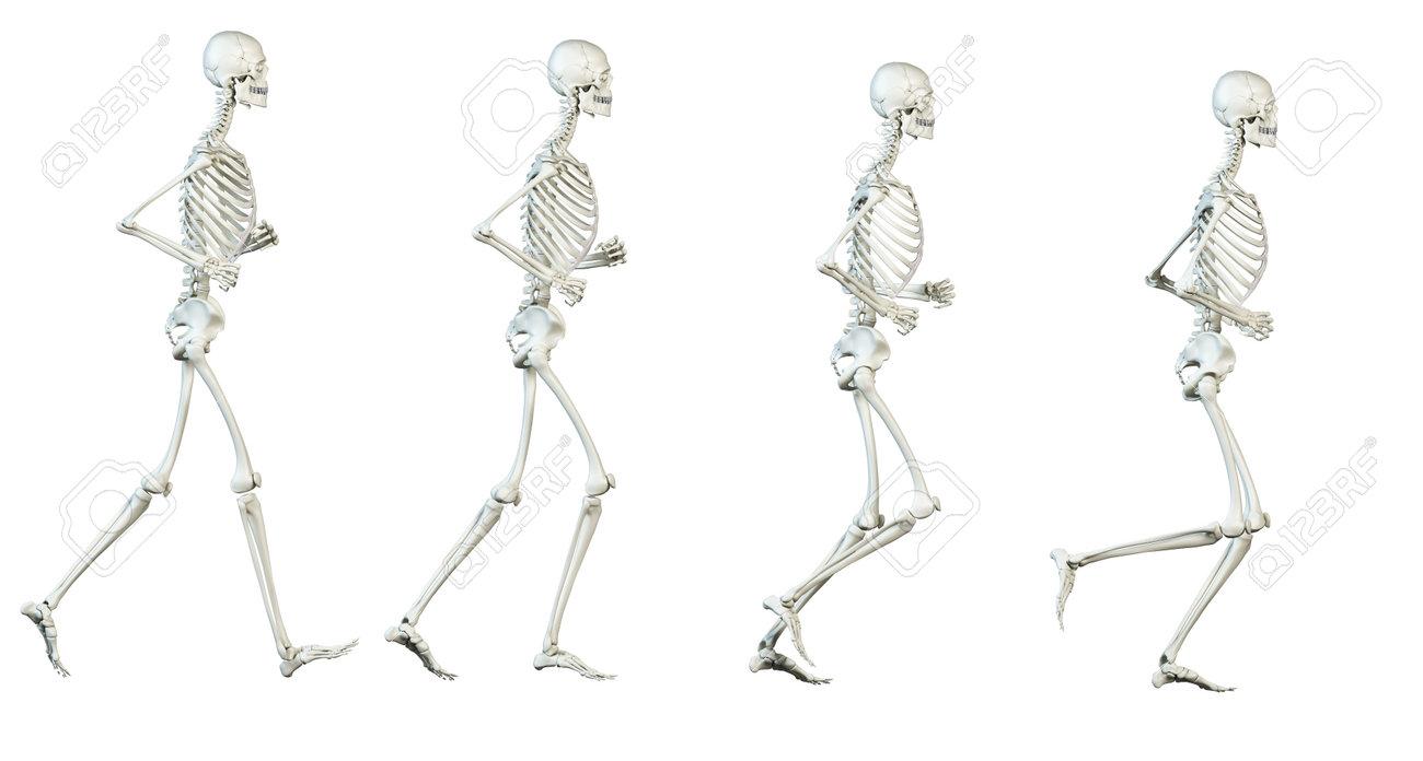 Corriendo Ilustración Ciclo - El Esqueleto Fotos, Retratos, Imágenes ...