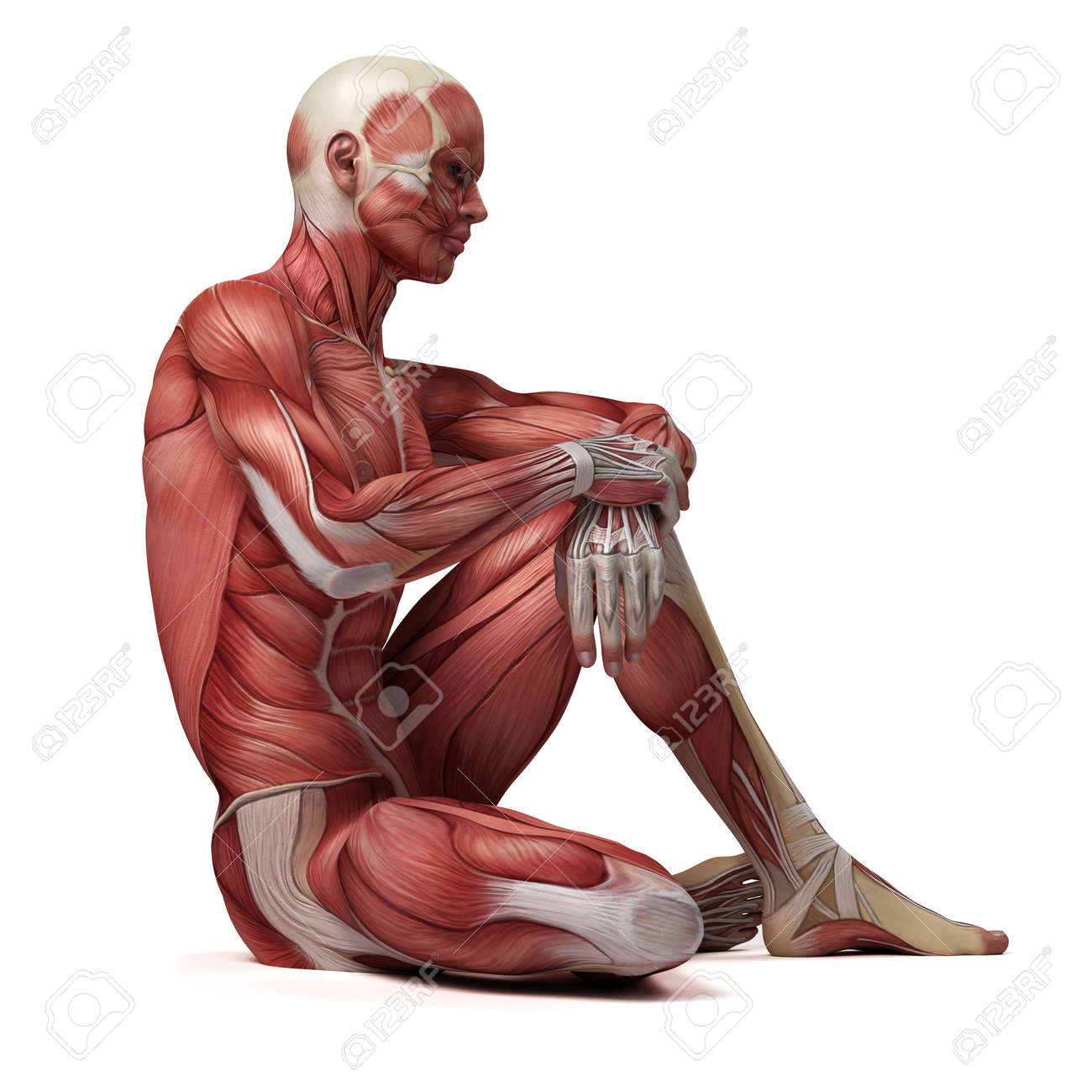 Physiology Stock Photos. Royalty Free Physiology Images