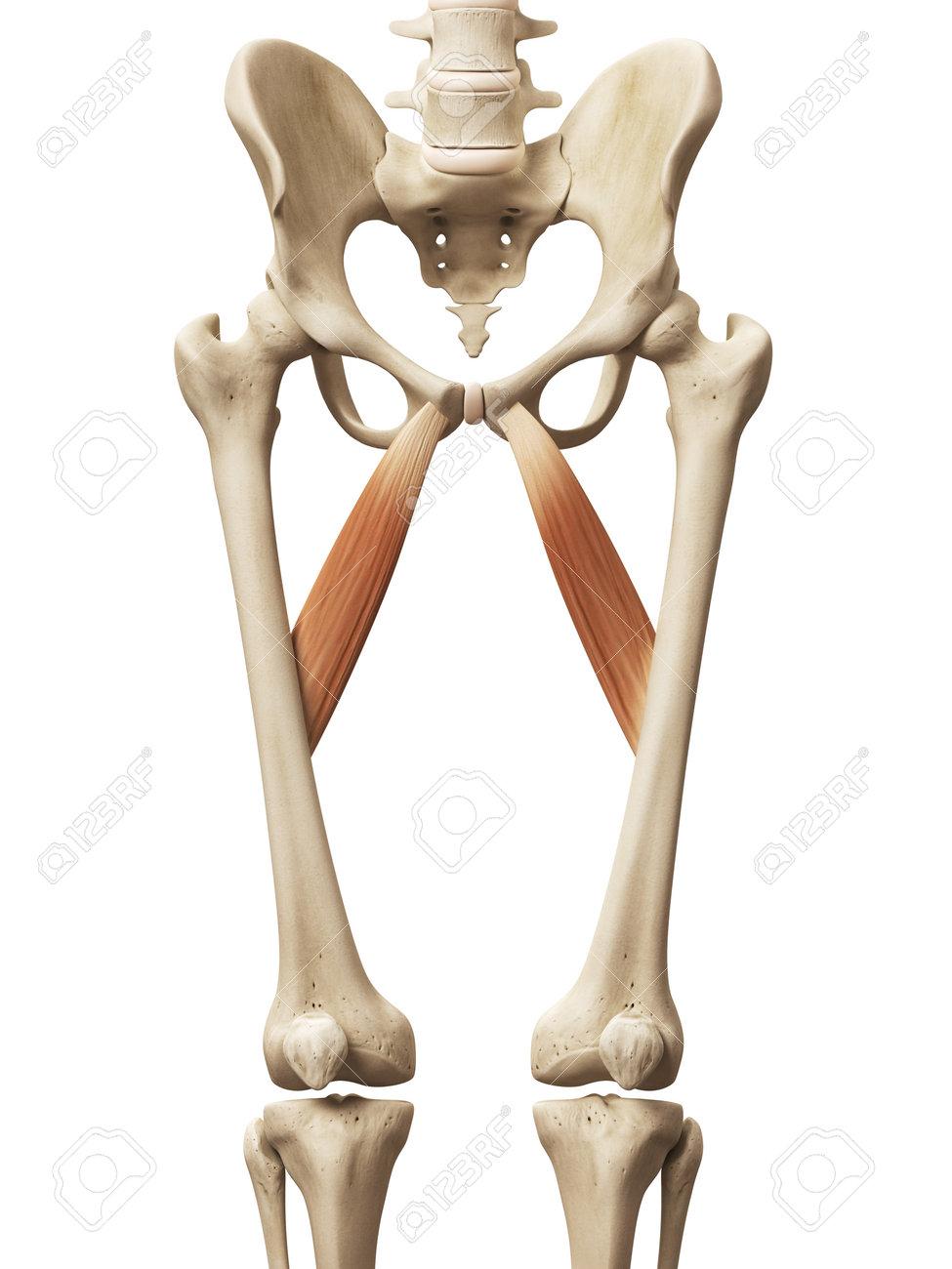 Wunderbar Anatomie Mnemotechnik Muskeln Zeitgenössisch - Anatomie ...