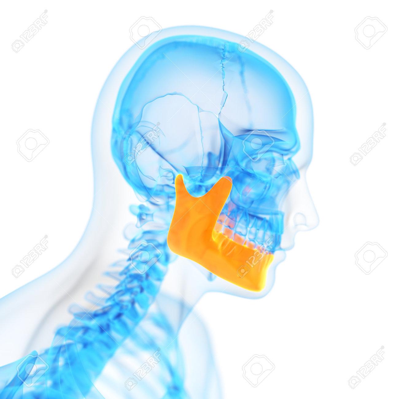 medical 3d illustration of the jaw bone - 32521630