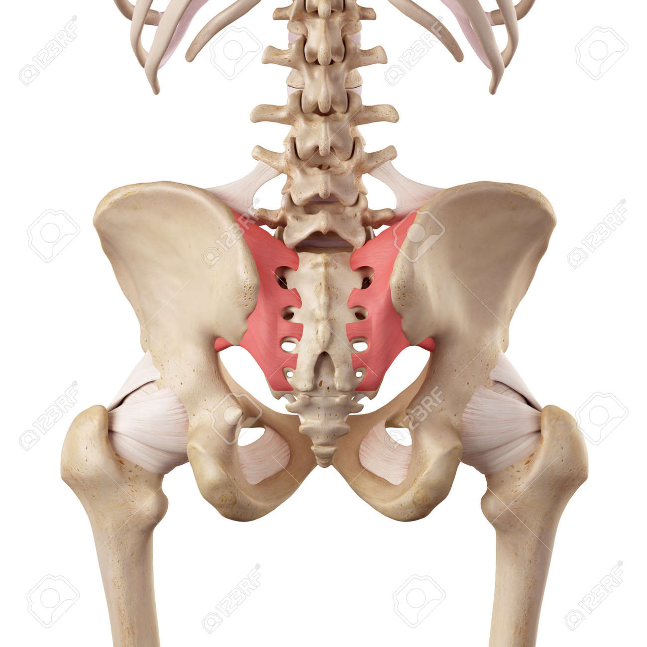 84 Sacroiliac Joint Cliparts, Stock Vector And Royalty Free ...
