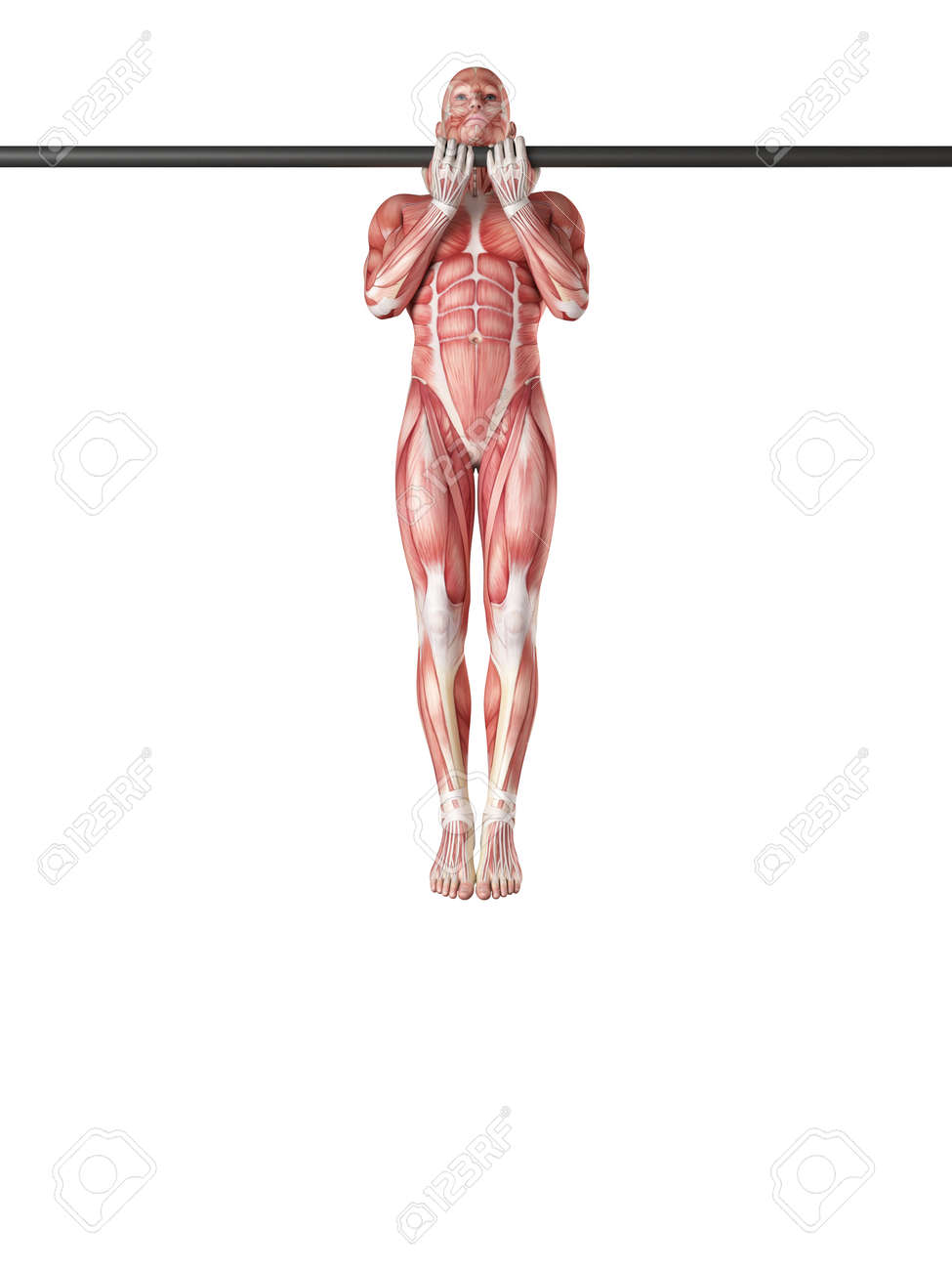 Exercise Illustration - Close Grip Chin Up Stock Photo, Picture And ...