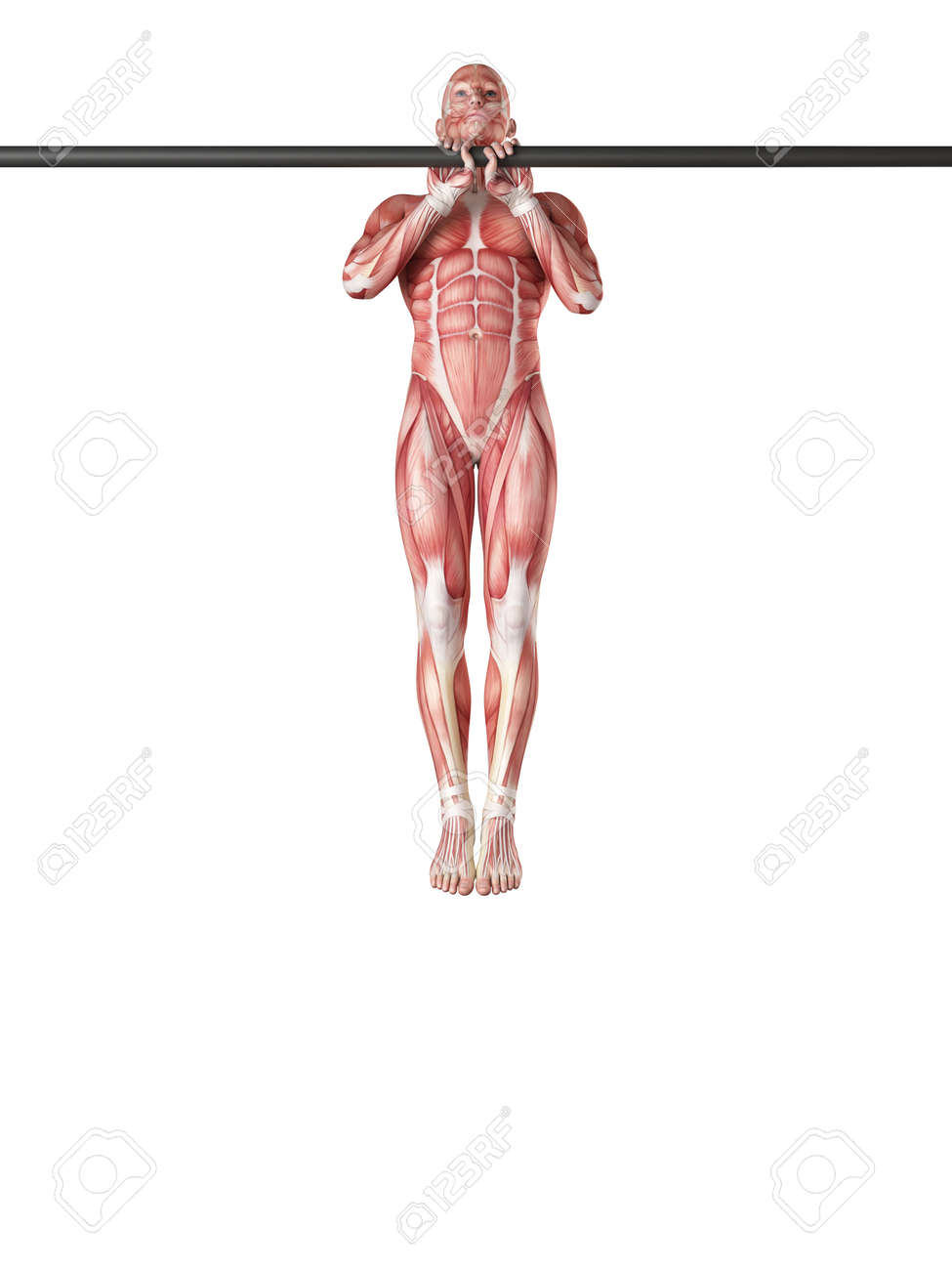 Exercise Illustration Close Grip Pull Ups Stock Photo Picture And