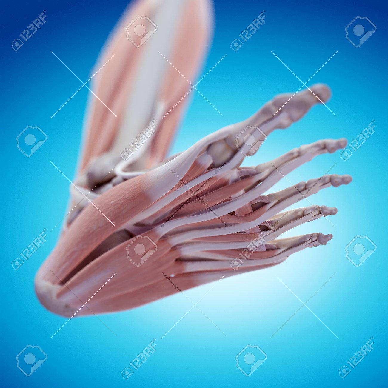 Fantástico La Colocación De La Anatomía Tiro Oso Negro Galería ...