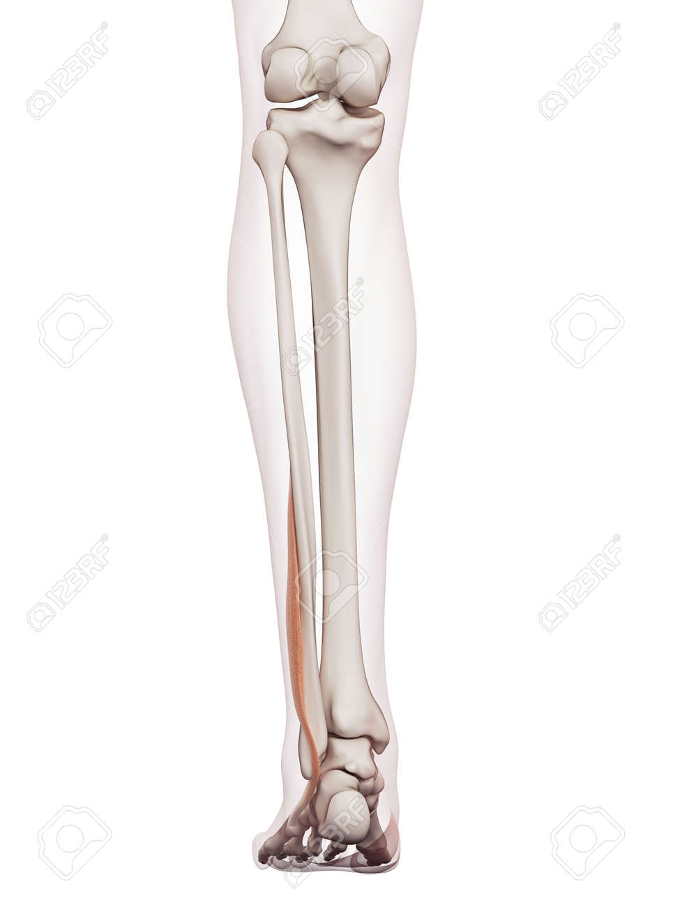 Beste Anatomie Und Physiologie Kapitel 8 Praxistest Galerie ...