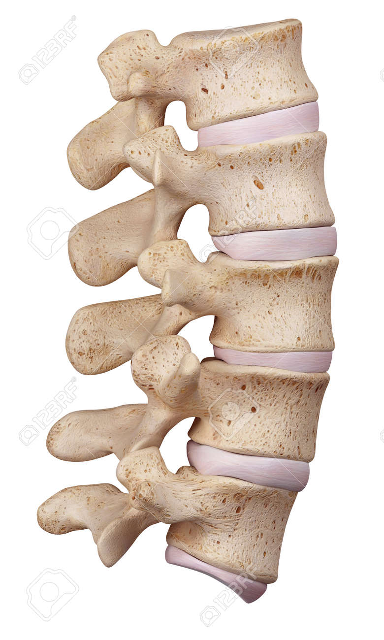 Medically Accurate Illustration Of The Lumbar Spine Stock Photo