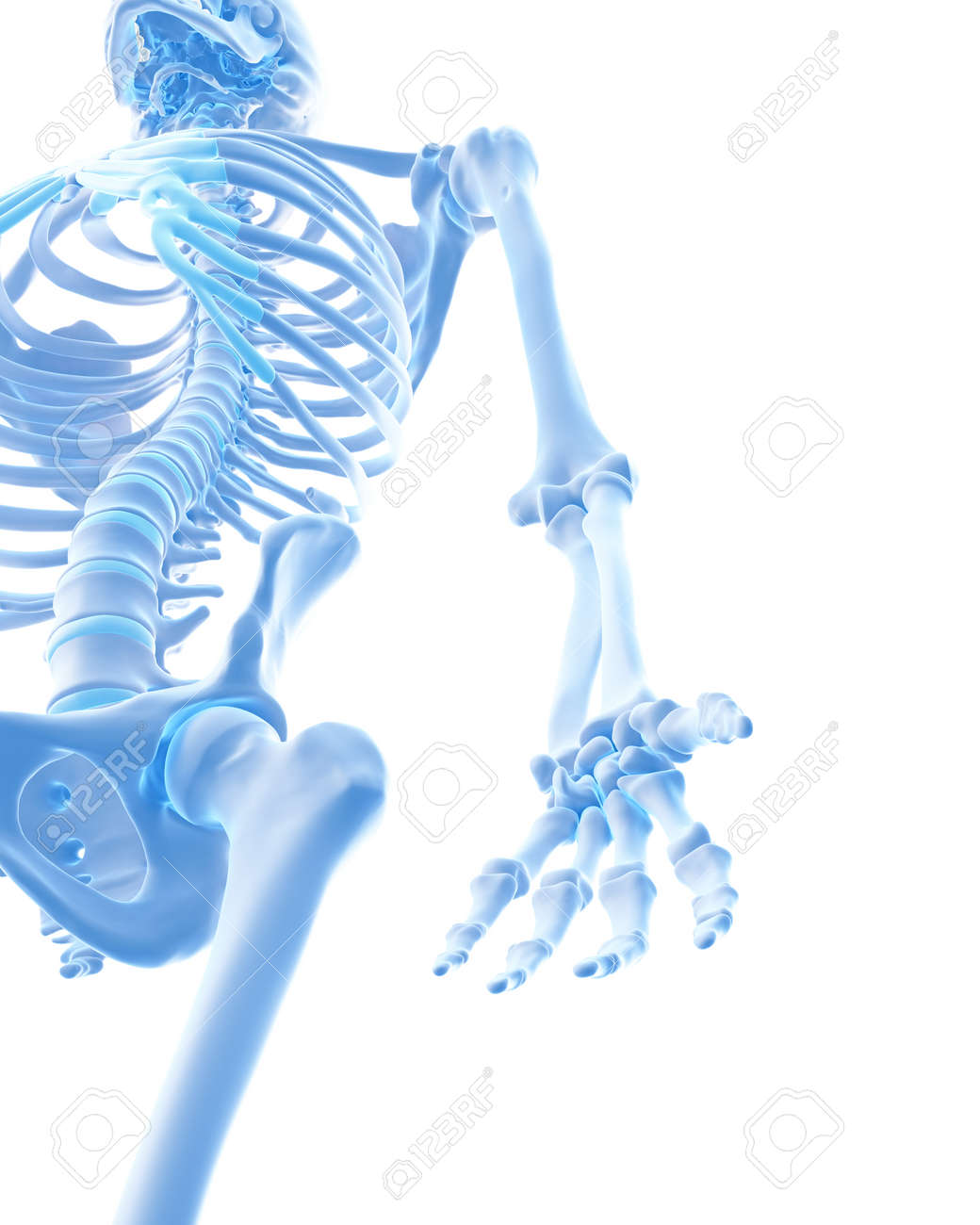 Charmant Handknochenanatomie X Ray Fotos - Menschliche Anatomie ...