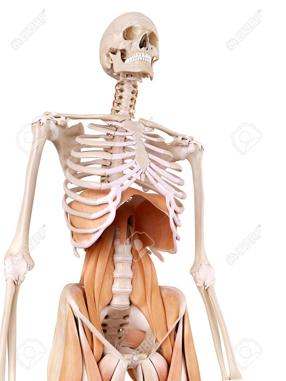 Famoso Anatomía De La Ingle Masculina Ideas - Anatomía de Las ...