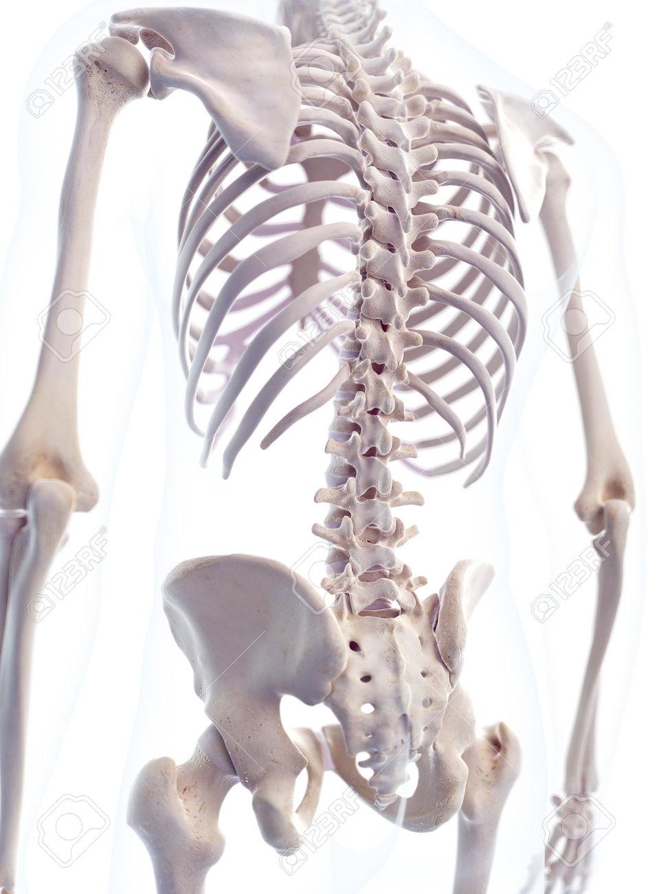 Médicamente Exacta 3d Ilustración De La Columna Vertebral Humana ...