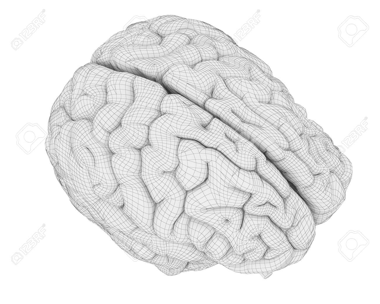 3d Rendered Medically Accurate Illustration Of The Brain Anatomy ...