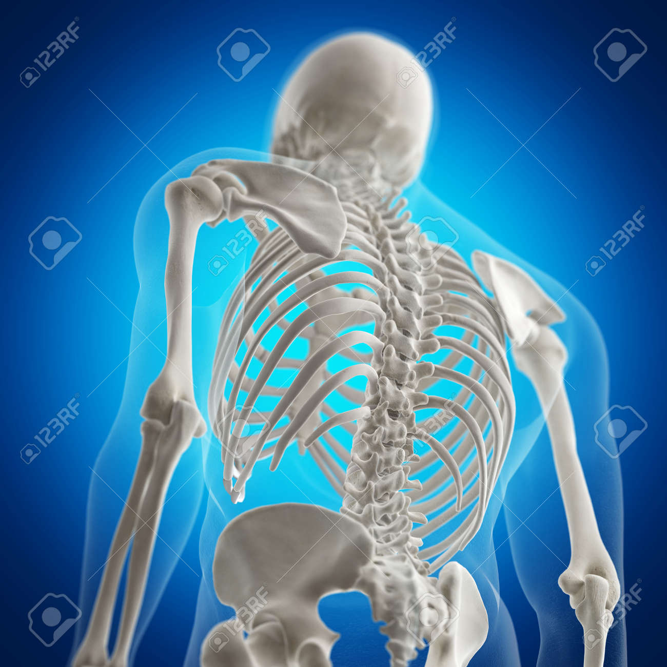 3d Rendered Medically Accurate Illustration Of The Skeletal Back