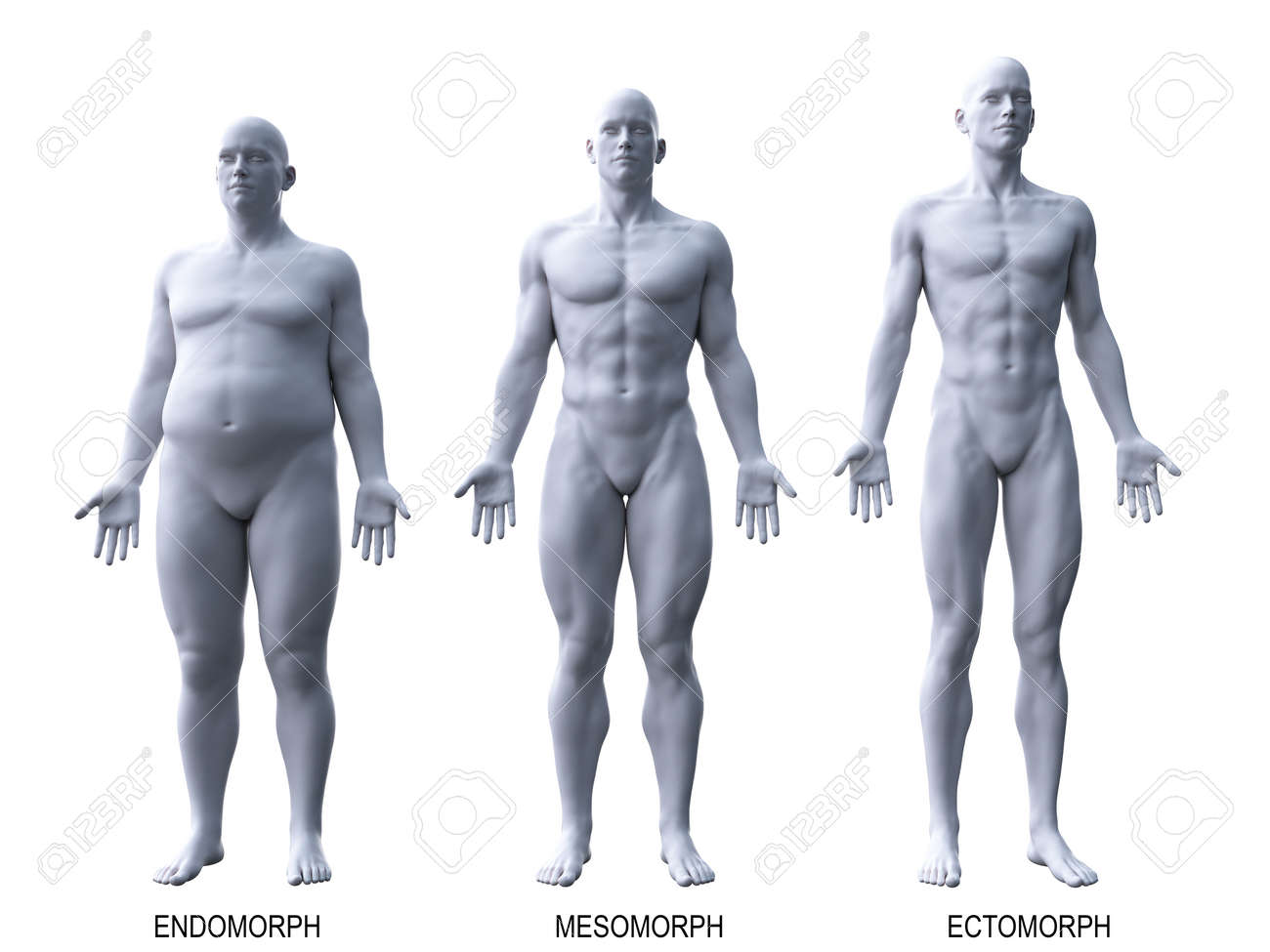 3d rendered medically accurate illustration of the male body types - 113508076