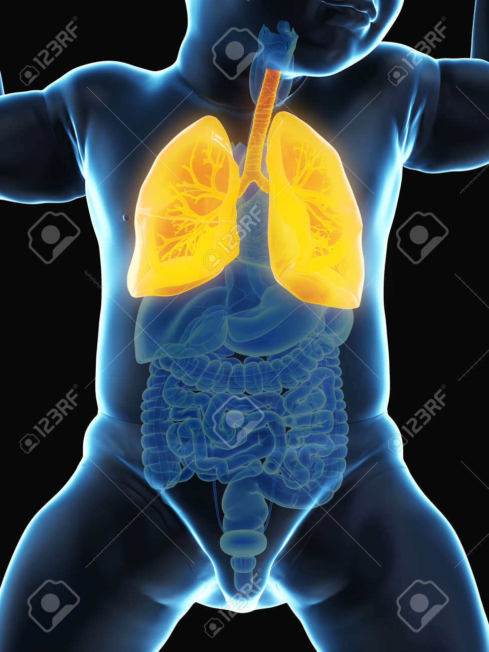 3d rendered medically accurate illustration of a babys lung - 125045992