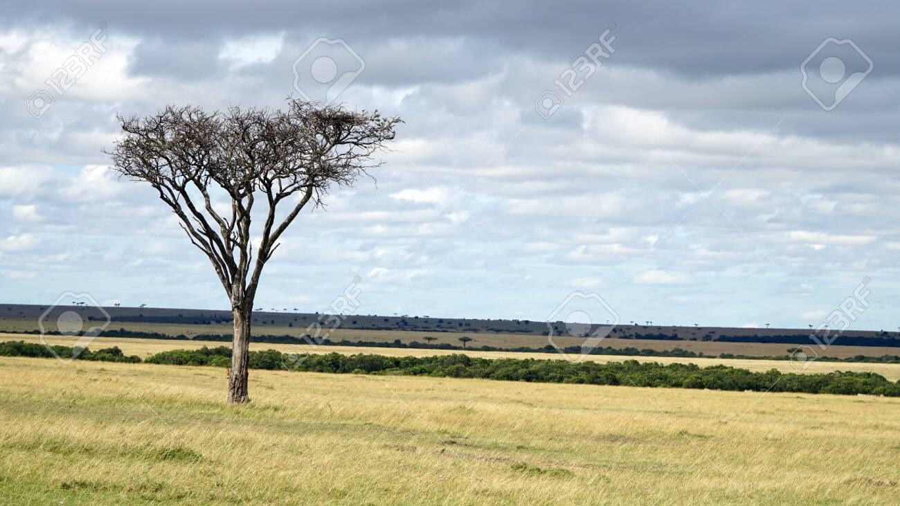 Savannah Plains and Acacia Trees - 146048203
