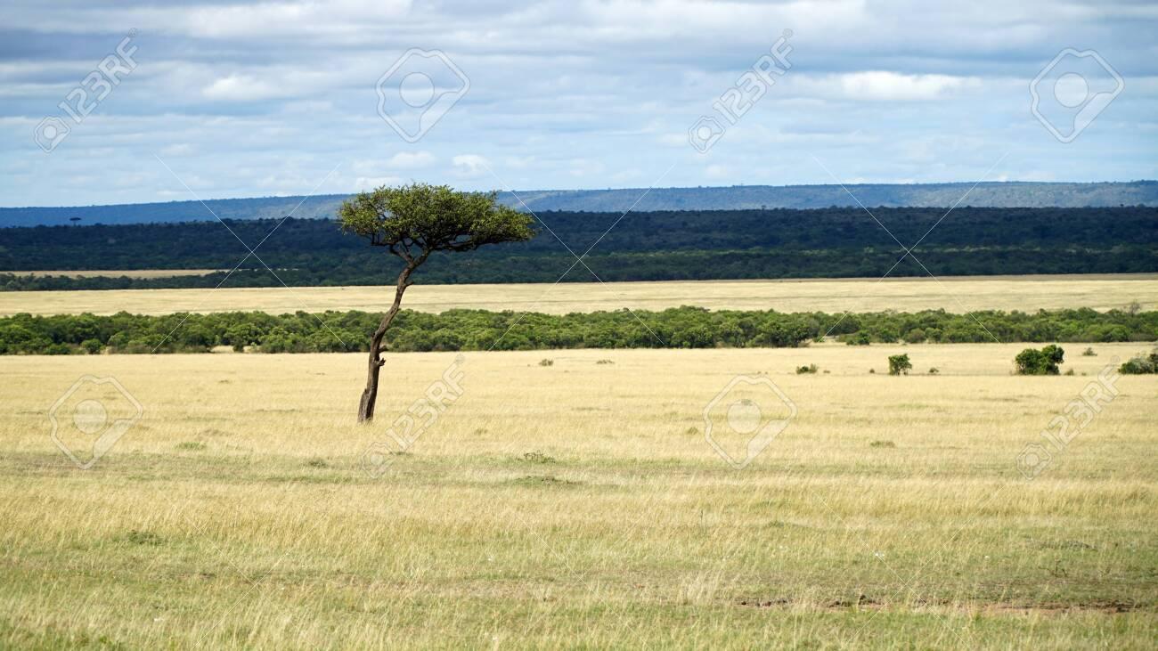 Savanna and Grass Fields in Africa - 146345946
