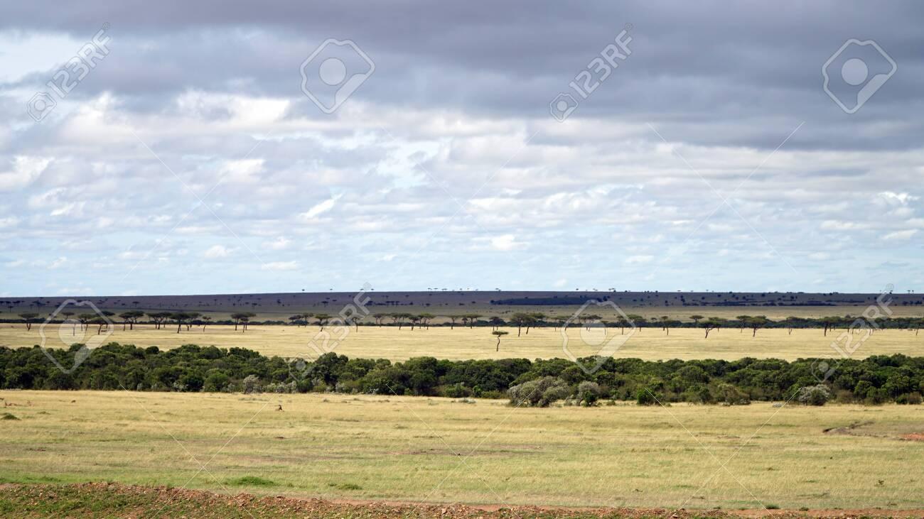Savannah of Africa with Acacia Trees - 146345957