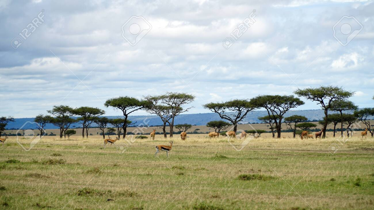 Safari Animals in African Savanna - 146346032