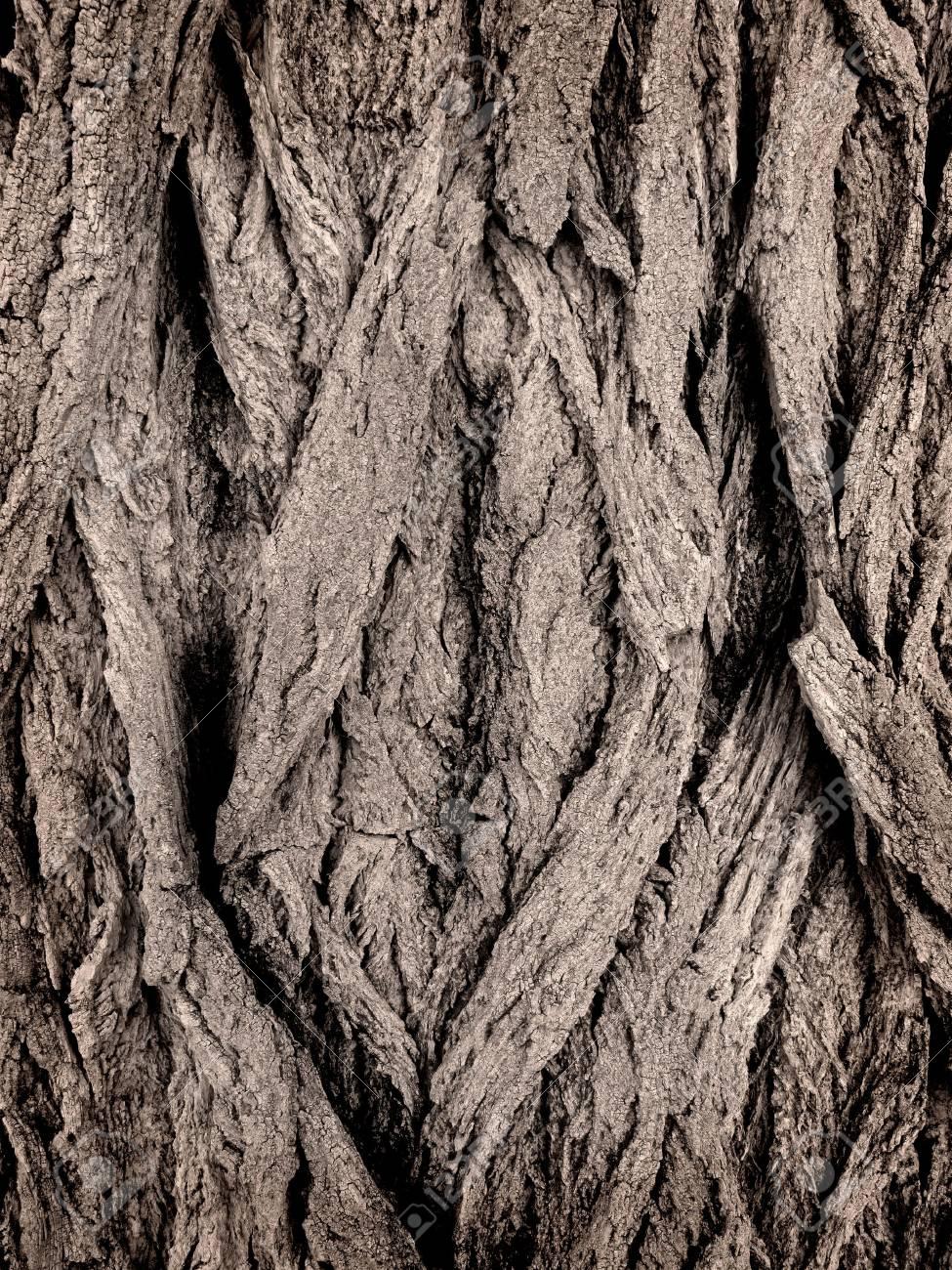 Closeup of grey bark on a tree Stock Photo - 5327358