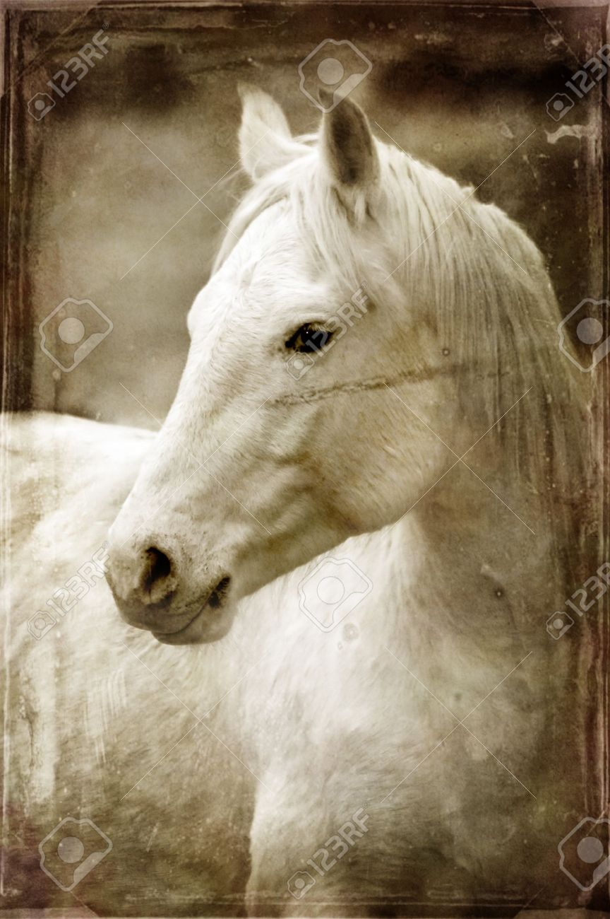 Vintage photograph of horses with white and gray storm clouds in sky Stock Photo - 9634119