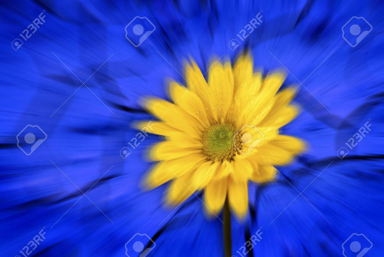 Zoomed Yellow Flower With Blue Background Stock Photo Picture And