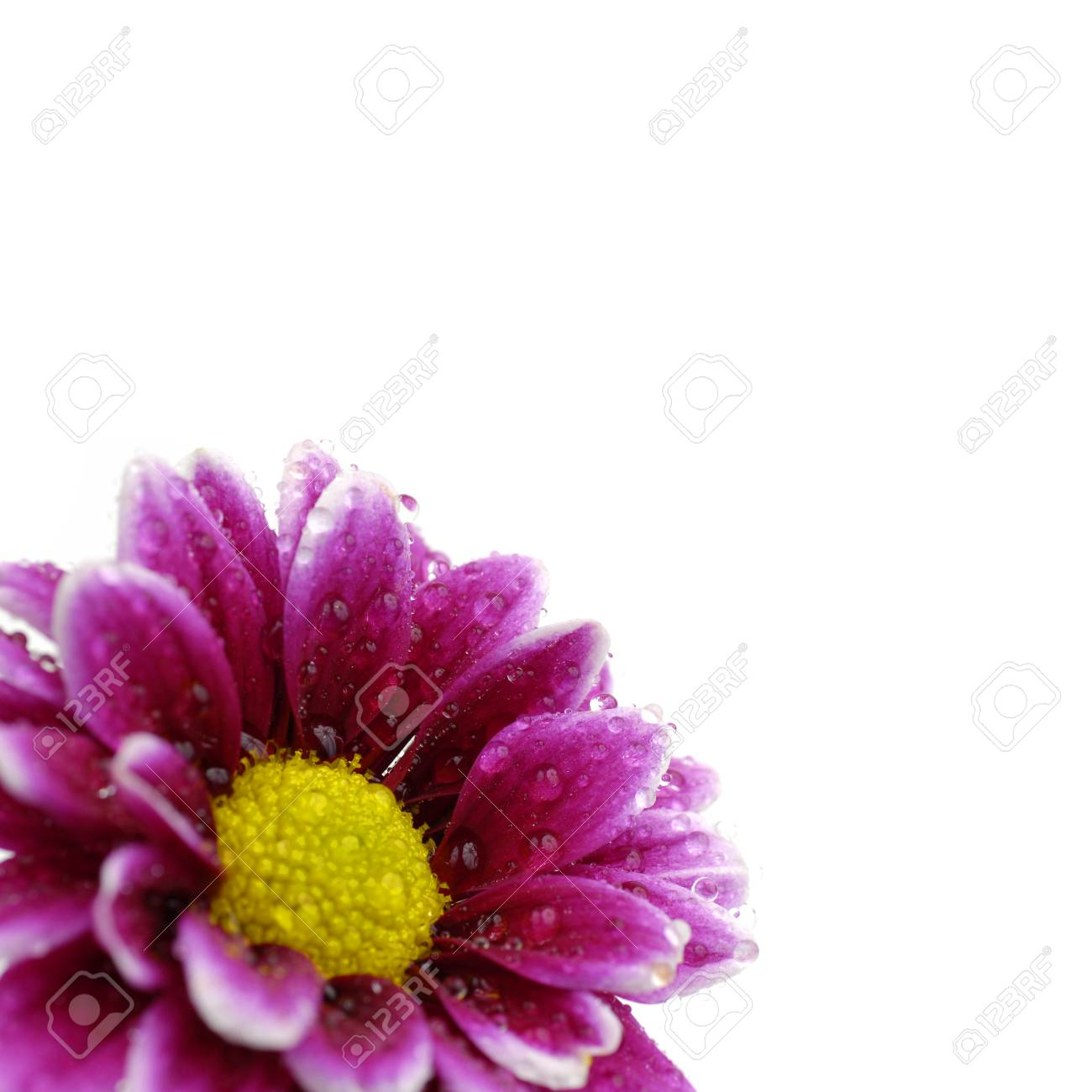 Pink Flower With Yellow Center Bright Background Stock Photo