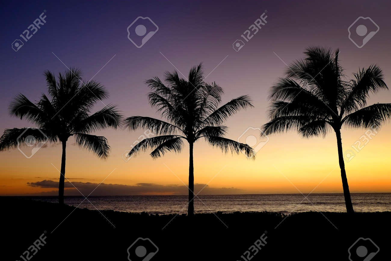 Palm trees silhouetted against sunset with ocean in background - 155077611