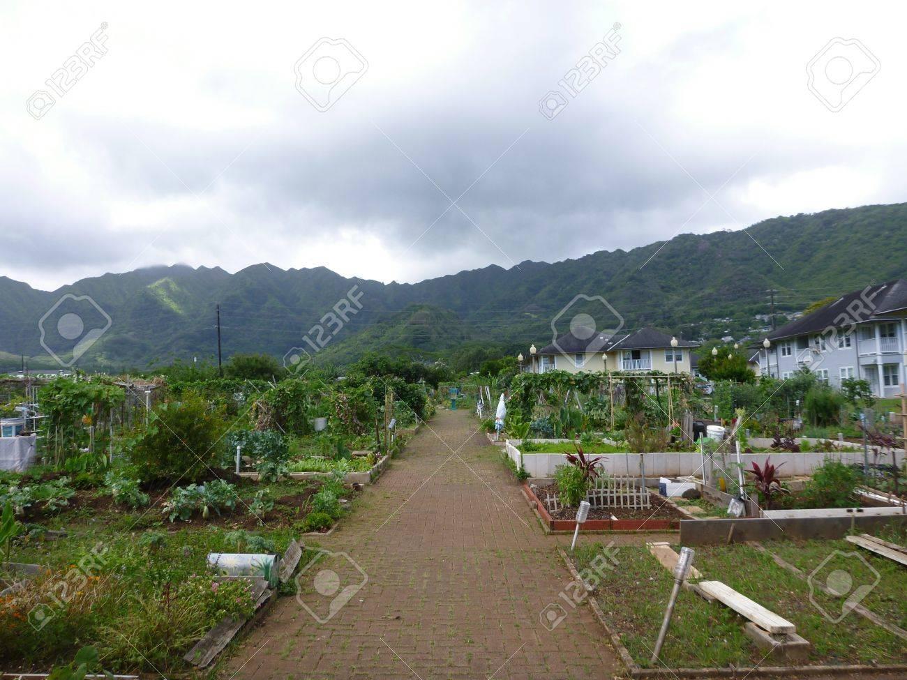 Manoa Community Garden in Manoa Valley on Oahu, Hawaii  On an overcast day Stock Photo - 18147558