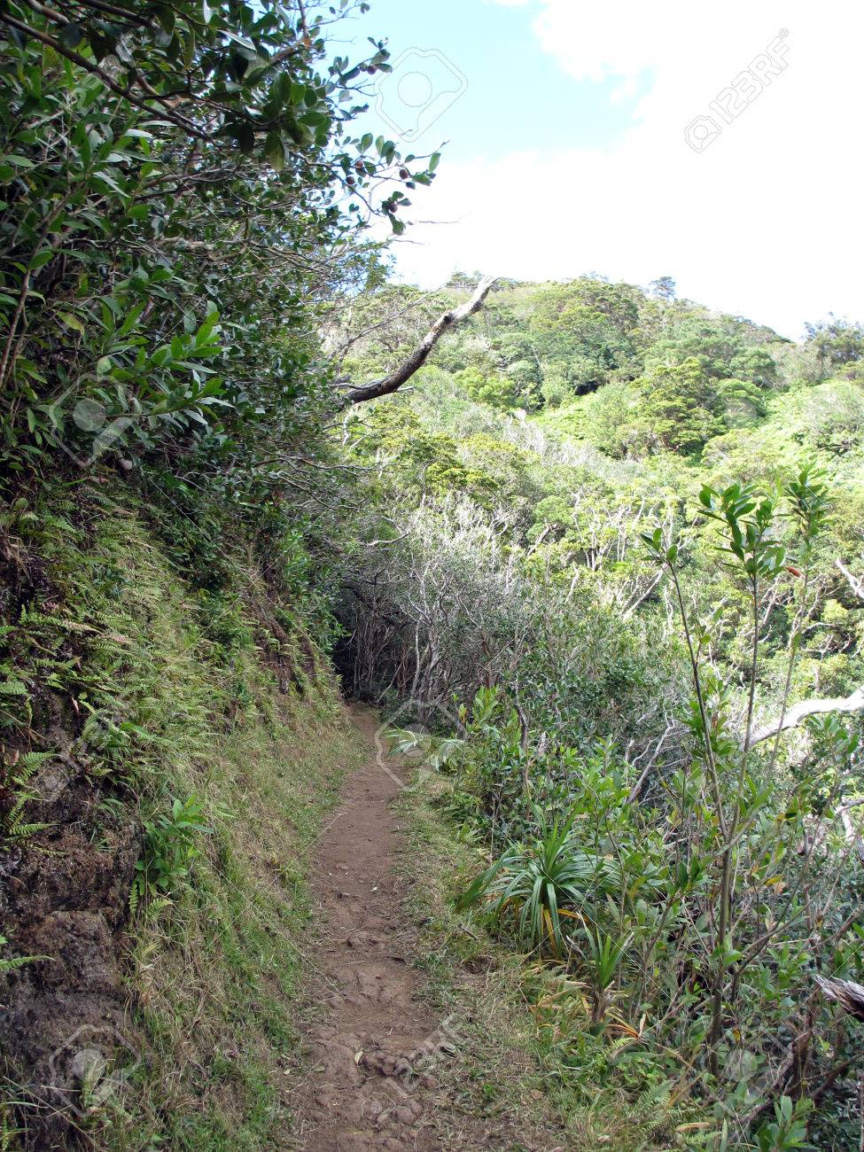 Cliffside Path Surrounded With Grass Bushes And Trees On