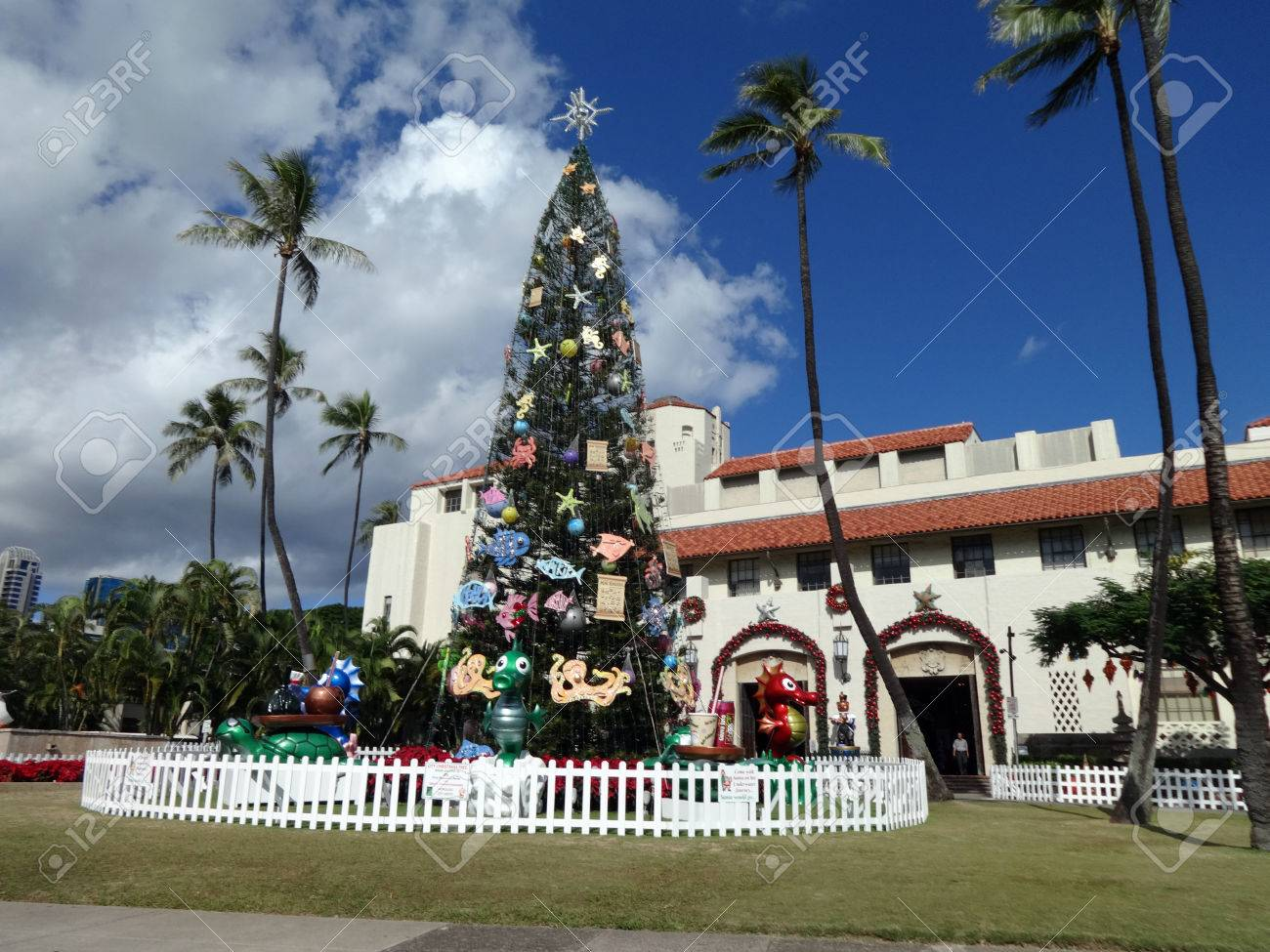 HONOLULU - DECEMBER 16, 2013: 50-foot Norfolk Pine Christmas.. Stock ...