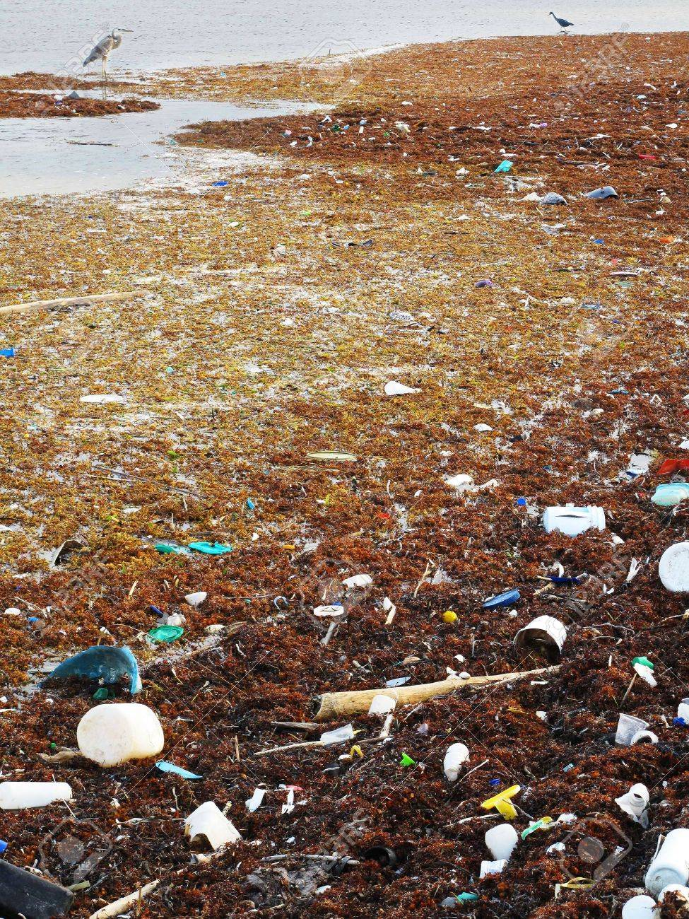 Pollution and debris on the shore with native birds. Stock Photo - 4731222