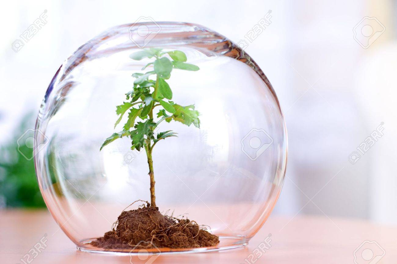 Protected Green Plant Inside A Glass Sphere Stock Photo   2379424