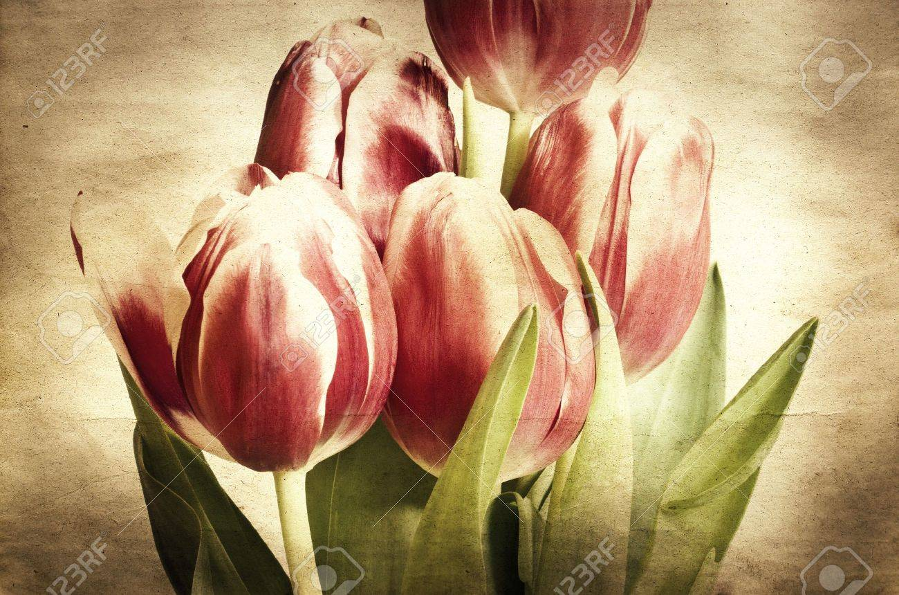 Vintage tulips Stock Photo - 9405932