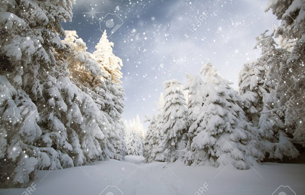 Christmas Forest.Snowfall In The Mountains Christmas Forest Background