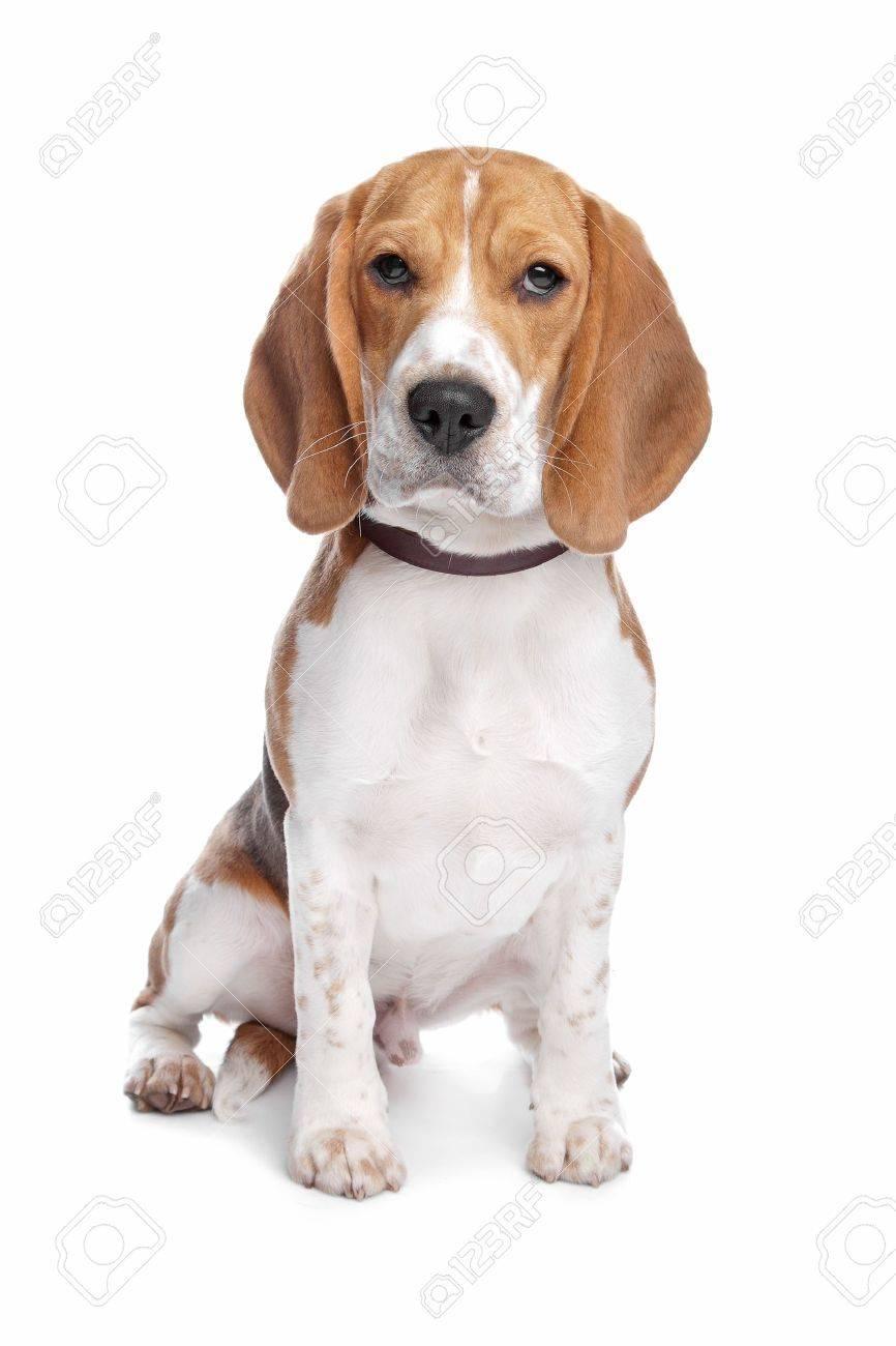 image de chien sur fond blanc