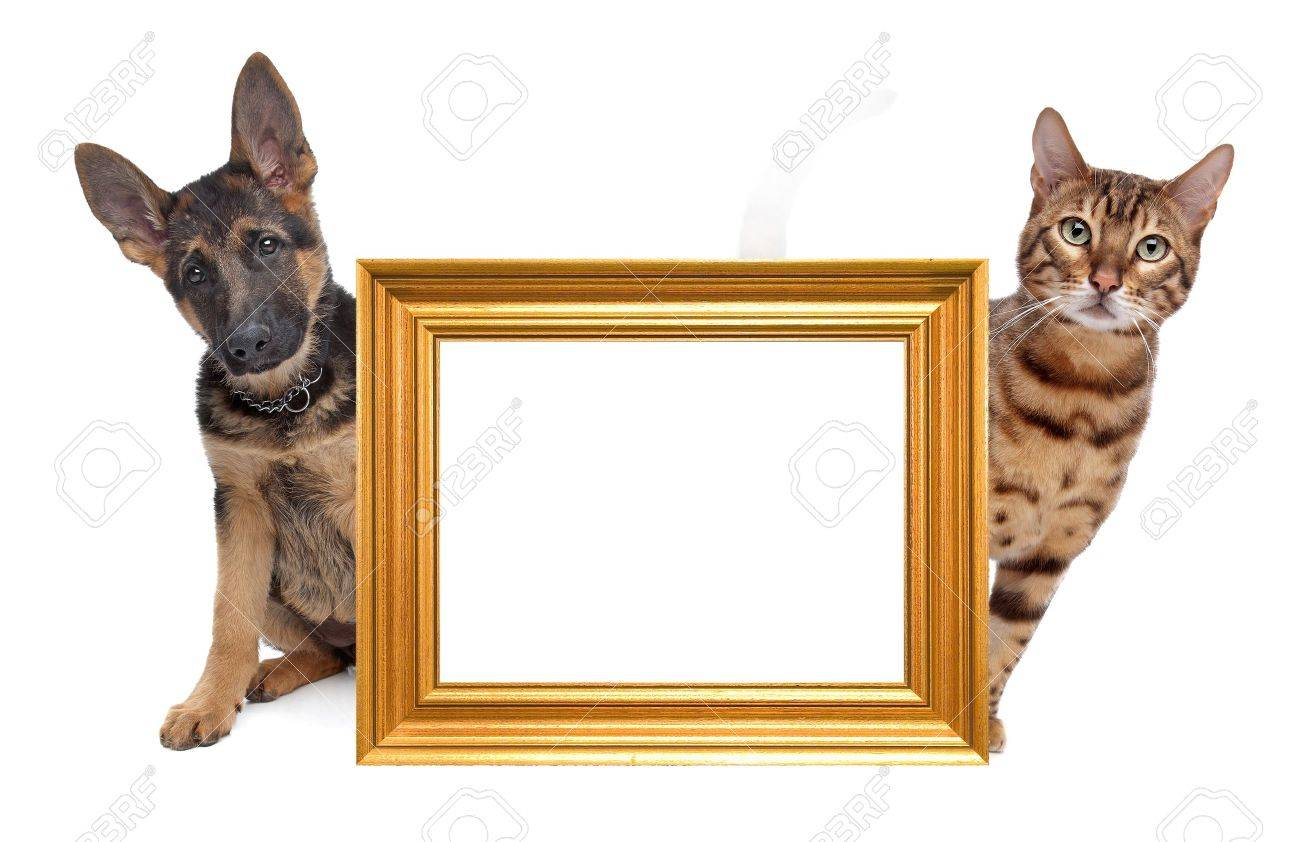 Cat And Dog Side To Side. In The Middle An Empty Golden Picture ...