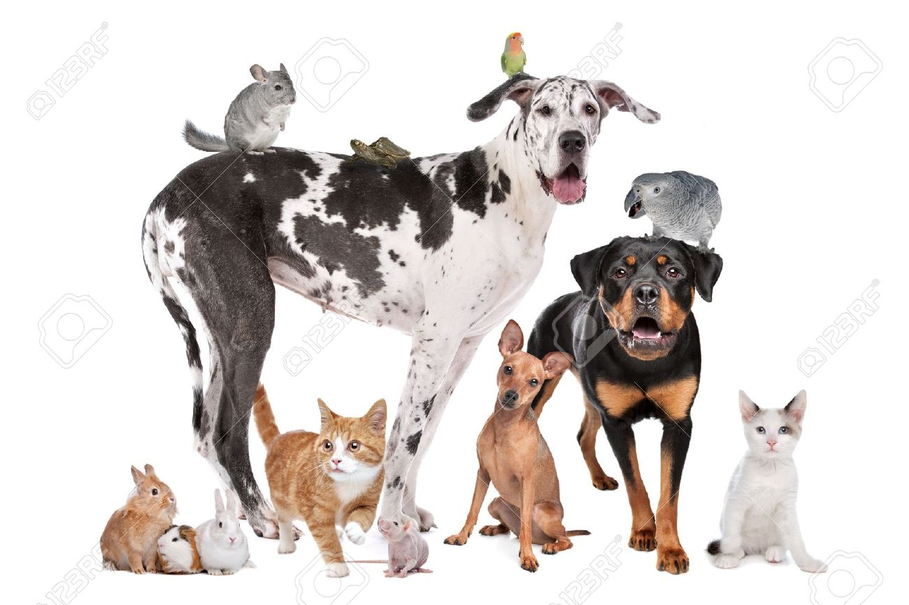 Group Of Dogs Cats Birds Mammals And Reptiles In Front Of A Stock Photo Picture And Royalty Free Image Image 11429972