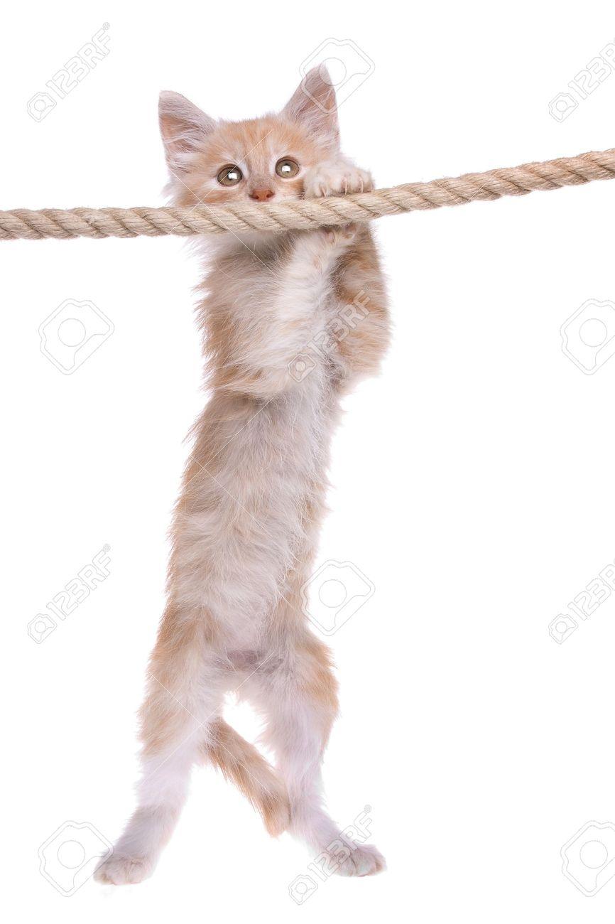 Kitten Hanging Branch Stock Photos &- Kitten Hanging Branch Stock ...