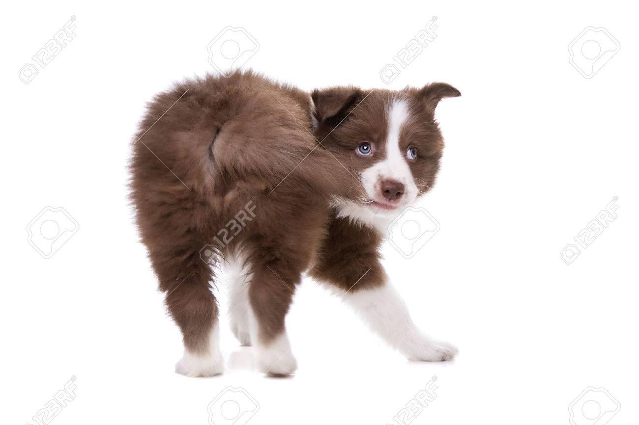 子犬 尻尾 噛む