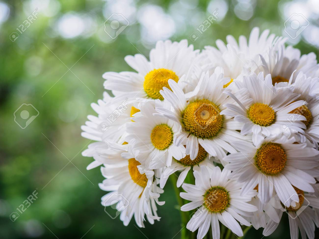 A bouquet of white field daisies on a green blurred background a bouquet of white field daisies on a green blurred background flowers with white petals mightylinksfo
