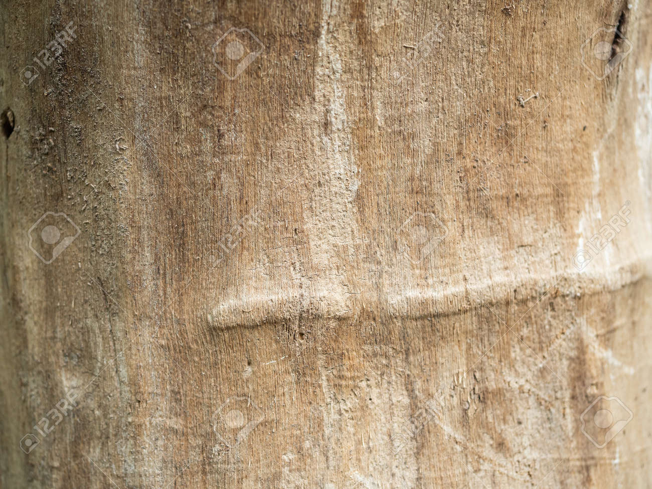 Texture of old wood with scratches close up. - 155505129