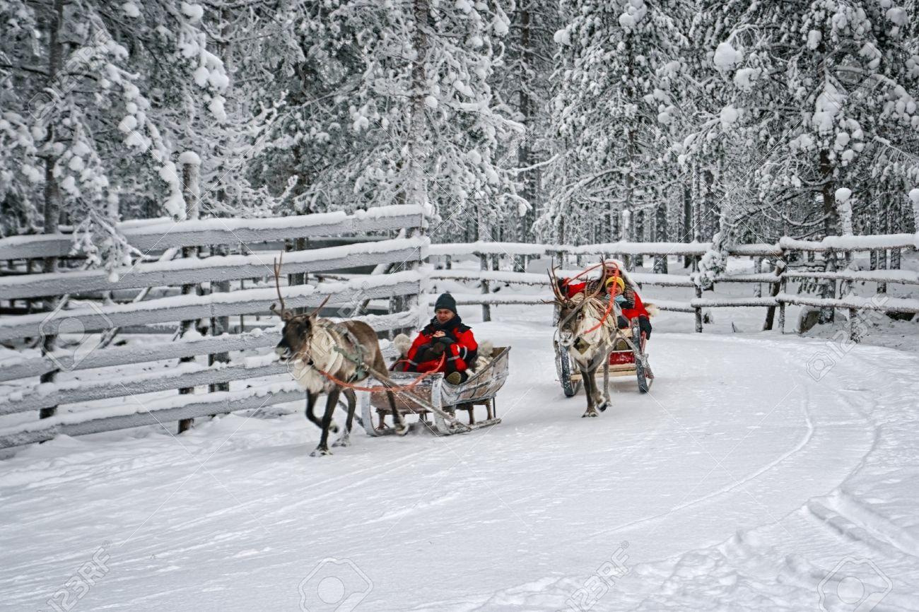 Rovaniemi, Finland - December 30, 2010: Racing on the reindeer sledges in Rovaniemi on December 30, 2010 - 34487998