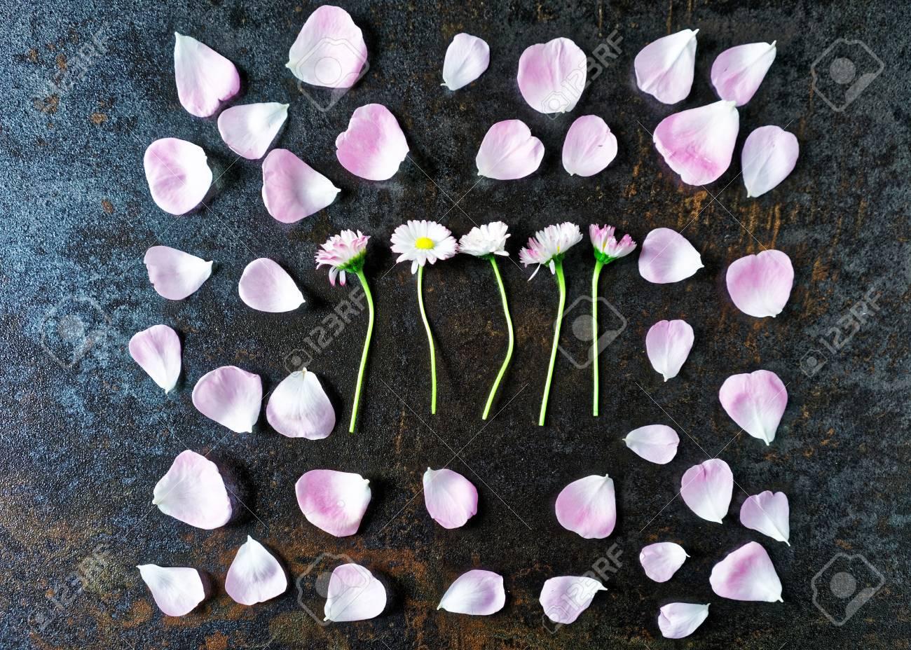 Telaio Con Petali Di Rosa Rose Tè E Fiori Margherita Su Pietra Con