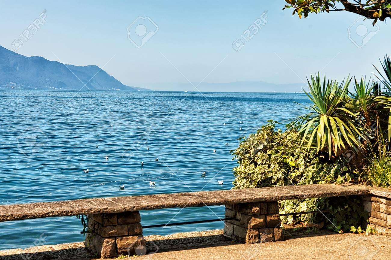 Banc Et Plantes En Fleurs A La Digue Du Lac Leman A Montreux Canton